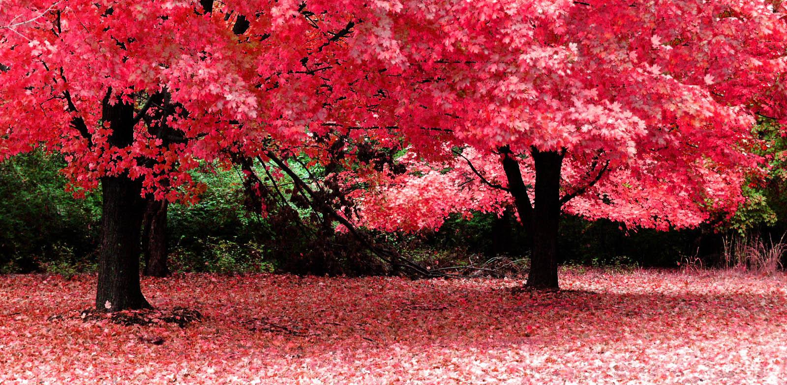 Consejos para tener tus rboles sanos y bonitos mi vivero en quito - Arboles bonitos para jardin ...
